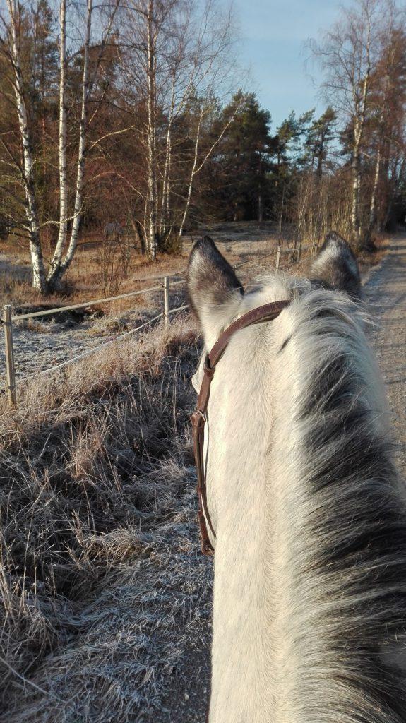 Ratsastajan vastuu ratsukon toisena osapuolena