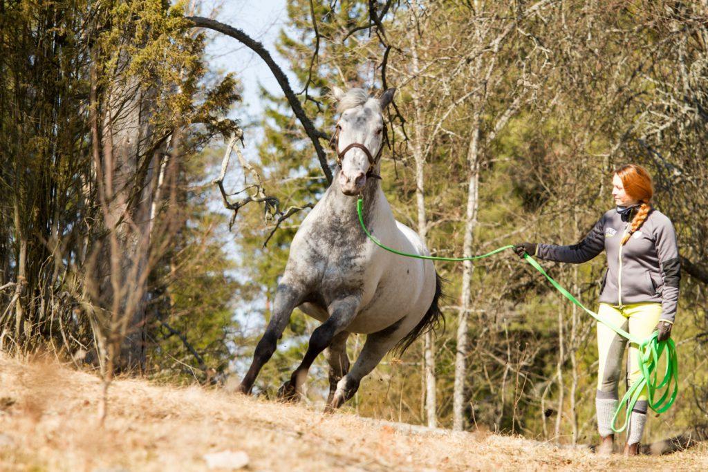 Jännittyvä hevonen